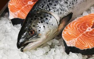 Свежемороженый лосось купить в спб
